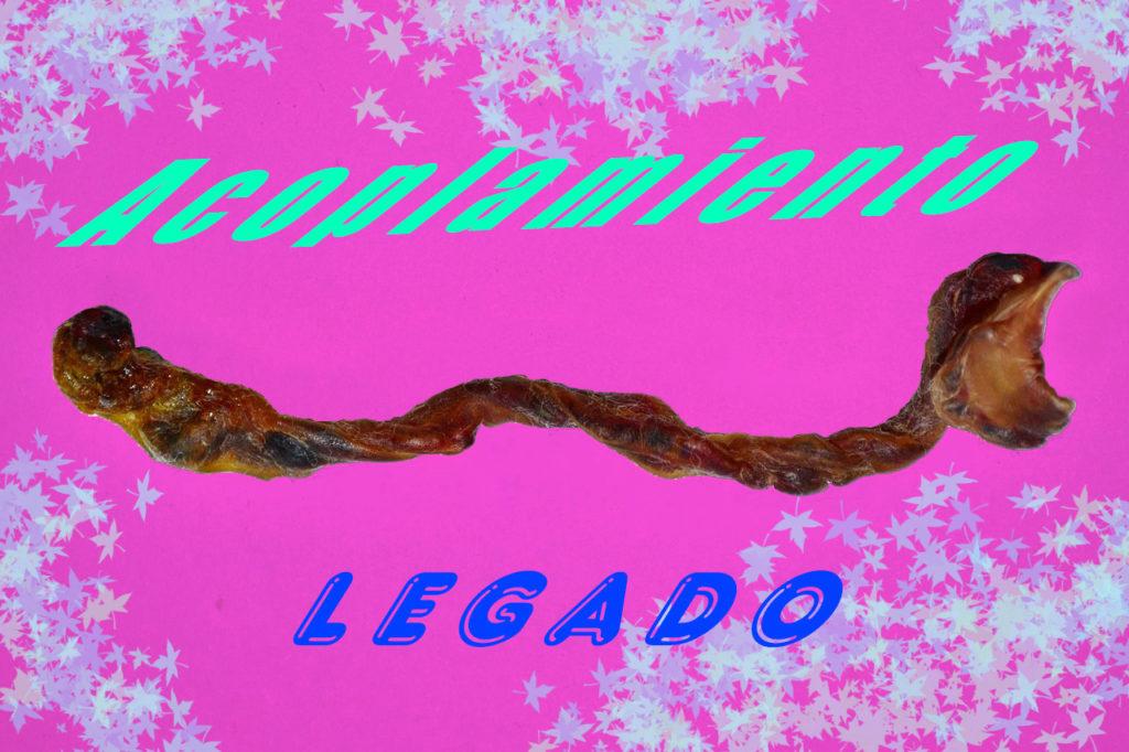 """Syntolkning: Bilden tillhör utställningen Ombligo och föreställer en torkad navelsträng som ligger horisontellt över en knallrosa bakgrund med texterna """"Acoplamiento"""" (koppling, bildelen) och """"LEGADO"""" (arv)."""